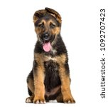 german shepherd puppy   3... | Shutterstock . vector #1092707423