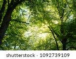 sun shining through a beautiful ... | Shutterstock . vector #1092739109
