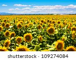 the sea of sunflowers | Shutterstock . vector #109274084
