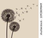 two delicate brown dandelions... | Shutterstock . vector #1092809849