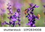 sunset over a violet lavender... | Shutterstock . vector #1092834008
