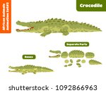 African Animal Crocodile For...