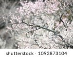 Small photo of korea temple flower