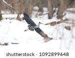 grey heron  ardea cinerea | Shutterstock . vector #1092899648