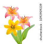 lily flowers on white  | Shutterstock . vector #1092909239