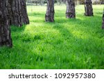 green grass and trees. sunny...   Shutterstock . vector #1092957380