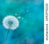 dandelion closeup on a blue...   Shutterstock . vector #1092970220