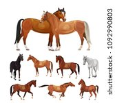 horses in various poses.... | Shutterstock .eps vector #1092990803