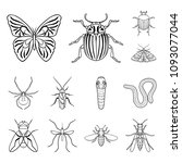 different kinds of insects...   Shutterstock . vector #1093077044