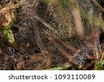 A Macro Image Of A Spider\'s We...