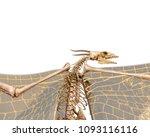 Dragon Skeleton In A White...