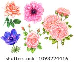 set of flowers of anemone and... | Shutterstock . vector #1093224416