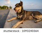 dog walks on the sandy beach on ...   Shutterstock . vector #1093240364