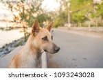 dog playing on the beach   Shutterstock . vector #1093243028