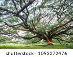big tree in thailand   thailand | Shutterstock . vector #1093272476