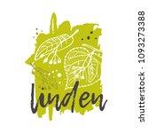 linden concept design. hand... | Shutterstock .eps vector #1093273388