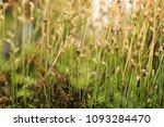 as carnivorous plants ...   Shutterstock . vector #1093284470