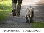 walking man's feet and hunting...   Shutterstock . vector #1093308920
