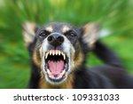 Barking Enraged Shepherd Dog...