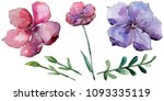 colorful  flax. floral... | Shutterstock . vector #1093335119