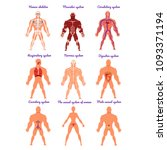 different human organ system... | Shutterstock .eps vector #1093371194