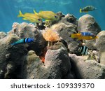 Coral Underwater With Colorful...