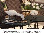birds eat pizza scraps from... | Shutterstock . vector #1093427564