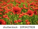 remembrance day  anzac day ... | Shutterstock . vector #1093427828