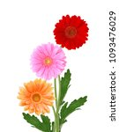 three daisy flower isolated on... | Shutterstock . vector #1093476029