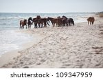 Group Of Wild Horses At Sea...