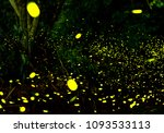 firefly flying in the forest.  | Shutterstock . vector #1093533113