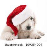 Golden Retriever Pup With Sant...