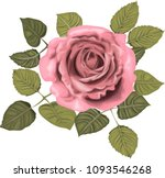 pink roses _ stylized vector... | Shutterstock .eps vector #1093546268