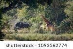 giraffe and african bush...   Shutterstock . vector #1093562774