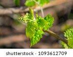 beautiful bright green vine...