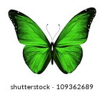 Green Butterfly  Isolated On...