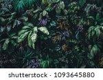 beautiful nature background of... | Shutterstock . vector #1093645880
