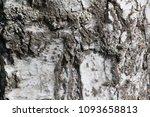 birch bark close up | Shutterstock . vector #1093658813