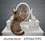 the cat looks at his reflection ...   Shutterstock . vector #1093667090