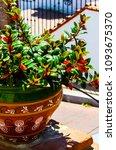 beautiful ceramic flower pot on ...   Shutterstock . vector #1093675370
