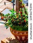 beautiful ceramic flower pot on ...   Shutterstock . vector #1093675394