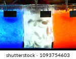 color drinking water and ice in ... | Shutterstock . vector #1093754603