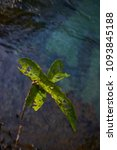 Small photo of Leaf above water