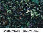 beautiful nature background of...   Shutterstock . vector #1093910063