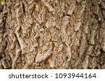 firewood the collection of... | Shutterstock . vector #1093944164