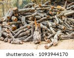 firewood the collection of... | Shutterstock . vector #1093944170