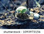 plant growing inside lamp bulb... | Shutterstock . vector #1093973156