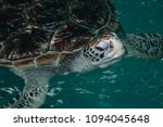 sea turtle conservation center... | Shutterstock . vector #1094045648