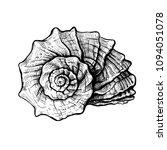 handdrawn sketch of a seashell... | Shutterstock .eps vector #1094051078