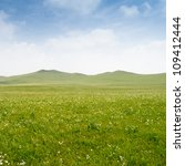 Bright Grass And Blue Sky....